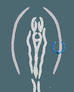 Äußeres Schamlippenpiercing
